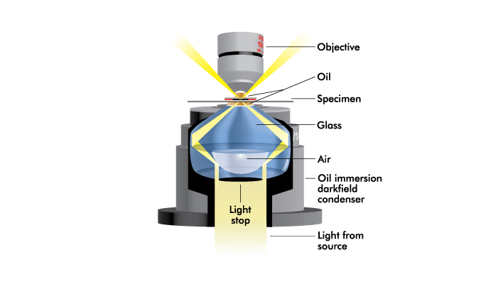 Oil Immersion Condenser