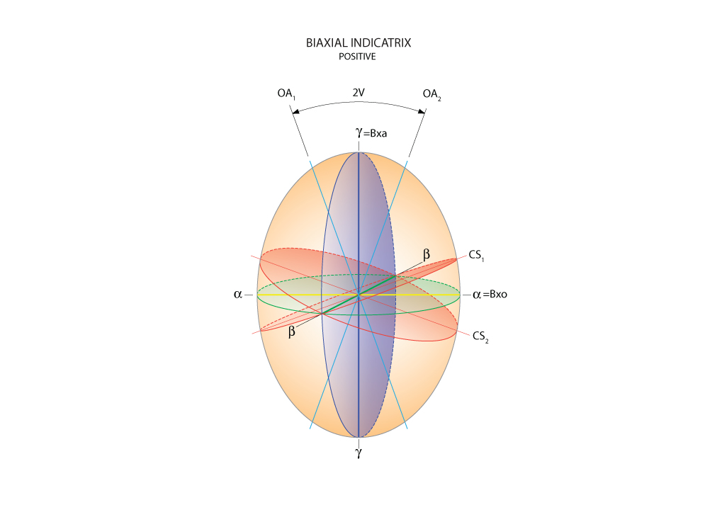 Biaxial Indicatrix